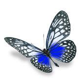 Znalezione obrazy dla zapytania kolorowy motyl