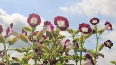 Purple flower in the wind — Stock Video