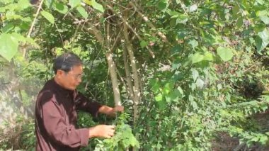 The medicine man picking medicinal herbs on the mountain — Stock Video