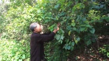 The medicine man and medicinal herbs — Stock Video