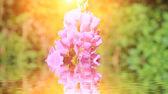 фиолетовые цветы и небо — Стоковое фото