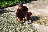 знахарь и лекарственных трав, вьетнам — Стоковое фото