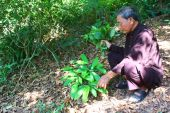 The medicine man picking medicinal herbs on the mountain, vietna — Stock Photo