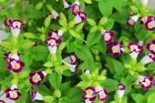цветы фиолетовые — Стоковое фото