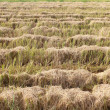 Fields after harvest — Stock Photo #56875791