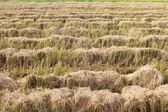 Fields after harvest — Stock Photo