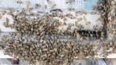 Makro skott av bin svärmar på en honeycomb — Stockfoto