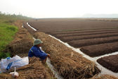 HAI DUONG, VIETNAM, October, 18: farmers growing vegetables in t — Stock Photo
