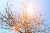 Dried branches and sky  — Stock Photo