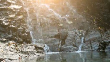 Pure fresh water waterfall in forest — Stock Video