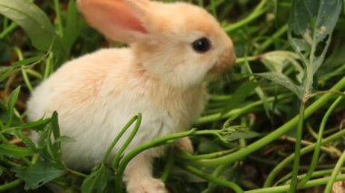 Rabbit on a green lawn Stock — Stock Video