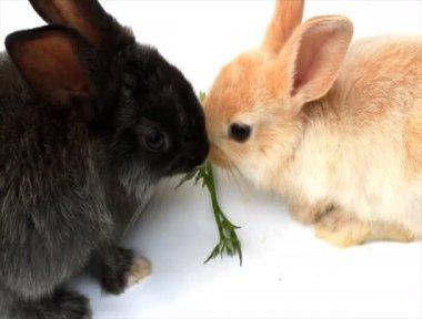 Pequeño conejo sobre un fondo blanco saltando alrededor — Vídeo de Stock
