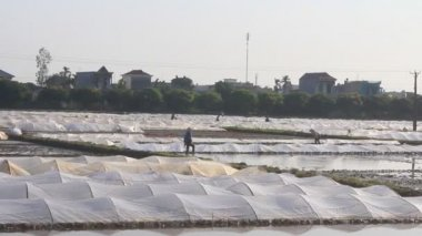 Farmers working in the fields — Stock Video