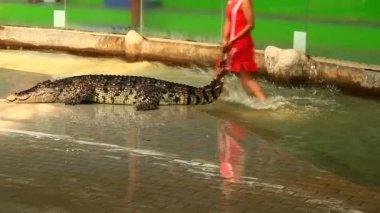 Bangkok, Thailand, July, 16, 2015: crocodile show in thailand — Stock Video