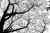 Silhouette tree — Stockfoto