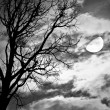 Dead Tree against moon and clouds  — Stock Photo #54164515