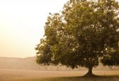 Vintage view of tree  in morning  mist  — Stock Photo