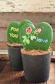 Heart shaped plant (Kerrii Hoya) — Stock Photo