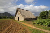 Barn for air-curing of tobacco — Stock Photo