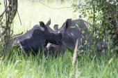 Young rhino covered in mud at Ziwa Rhino Sanctuary — Stock Photo