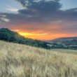 Sunset landscape of Tuscan green hills — Stock Photo #56417045