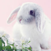 White rabbit — Foto Stock