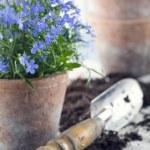 Vintage garden tools — Stock Photo #69565321