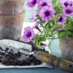Vintage garden tools — Stock Photo #69565535