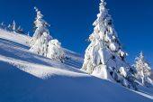 Beautiful snowy trees — Stock Photo