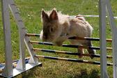 Rabbit-hopping — Stockfoto