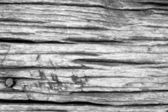 Black and white wood texture — Stock Photo