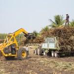 Sugarcane truck — Stock Photo #61583683