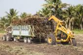 Sugarcane truck — Stock Photo