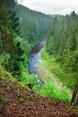 Blanice river in Bohemia — Stock Photo