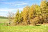 Beautiful spring landscape — Stock Photo