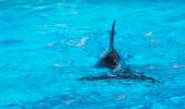 The flipper of dolphin — Stockfoto