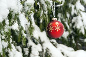 New Year red ball on winter forest background — Stock Photo