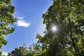 Sun rays through foliage and blue sky — Stock Photo