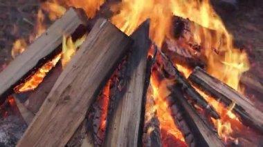 Bonfire in winter forest — Stock Video