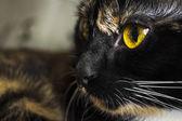 Cats eyes close — Stock Photo