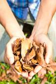 Leaves dry — Stock Photo
