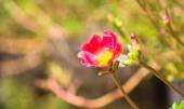 Schöne blumen — Stockfoto