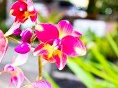 Piękny storczyk — Zdjęcie stockowe