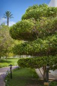 Trees in the park , beautiful park trees , formal garden  — Stock Photo
