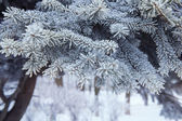 Christmas tree background snowy — Stockfoto