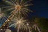 Christmas background palm tree — Photo