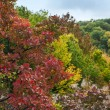 Bright red leaves in soft focus, autumn background, very shallow — Stock Photo #54636639