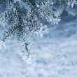 Image of snowy fir tree background, abstract natural backdrop, p — Stock Photo #54814371