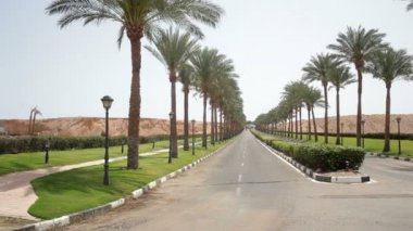 Nice asphalt road lined with palm trees on the sides in Egypt — Stock Video