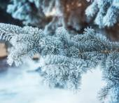 Winter background with snow-covered tree  — Stok fotoğraf
